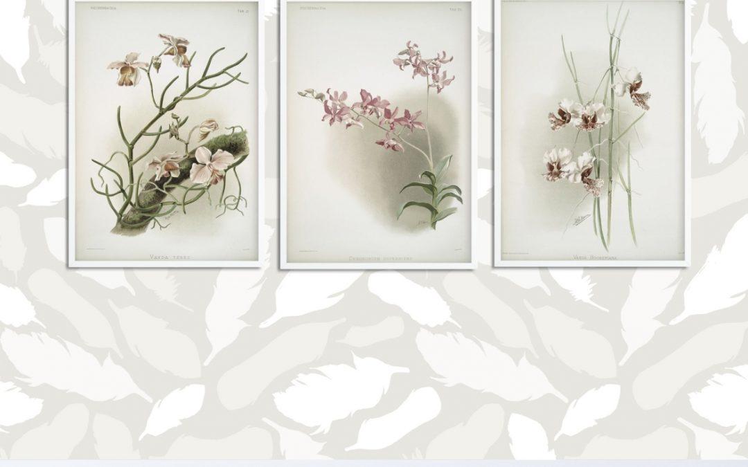 Darmowe plakaty botaniczne wprost z nowojorskiej biblioteki – pobierz i wydrukuj